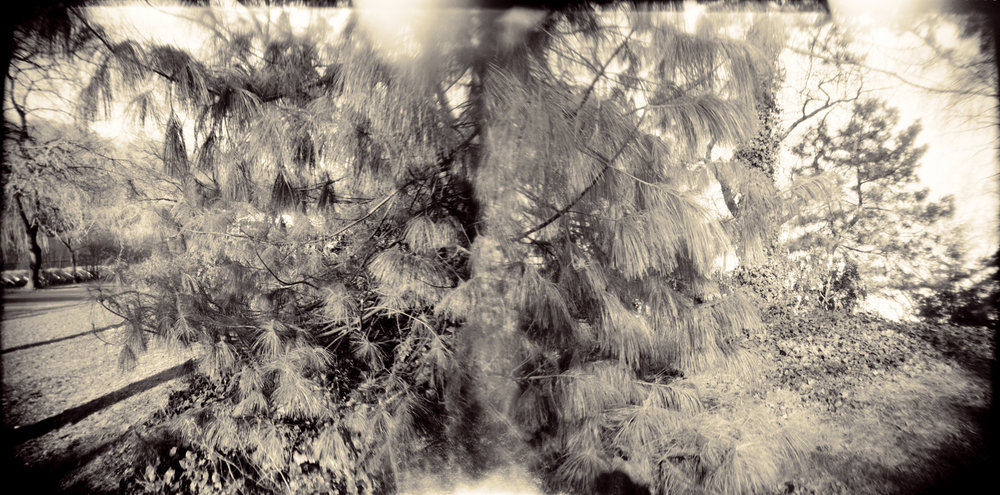 Landscape of Memory : lom 056   bleached silver print, framed  24 x 12cm, 1998