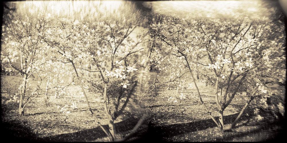 Landscape of Memory : lom 061   bleached silver print, framed  23 x 12cm, 1997