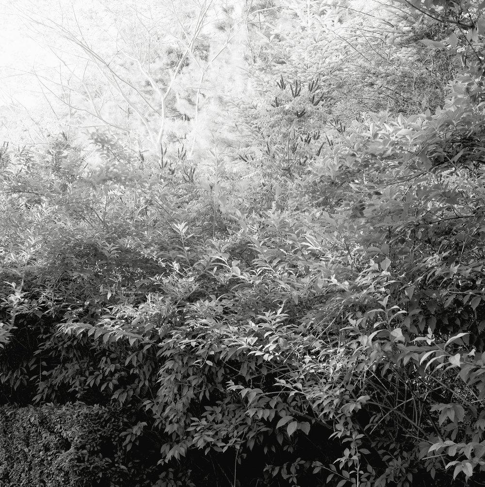 Silent Passage : sp 080   gelatin silver print, framed  50 x 50cm, 1994