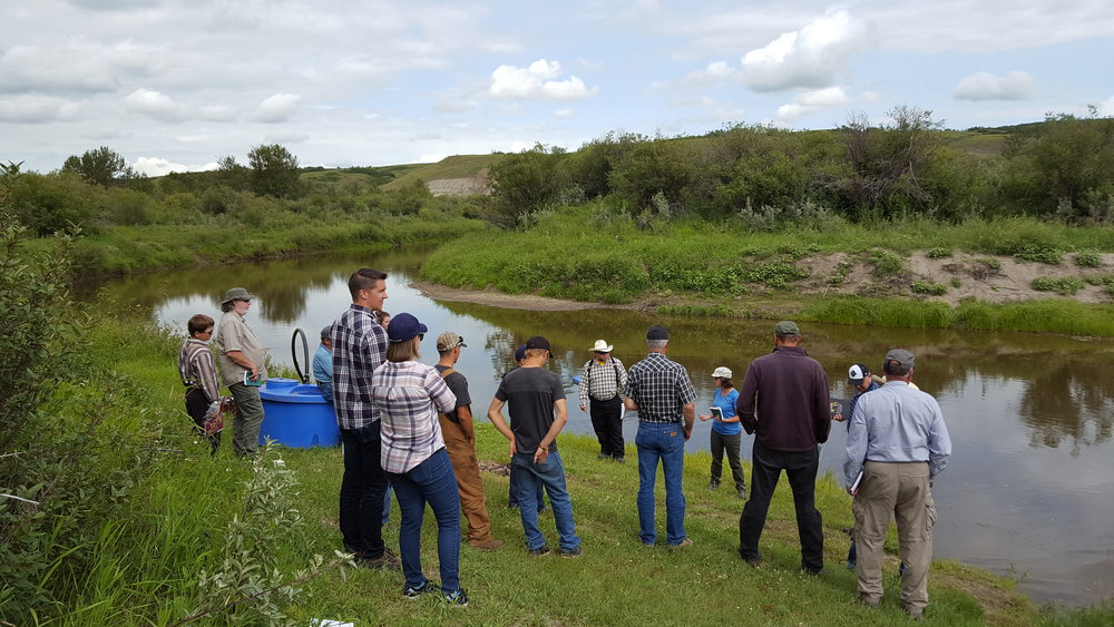 Landowners learn about riparian health assessments along the banks of the Battle River