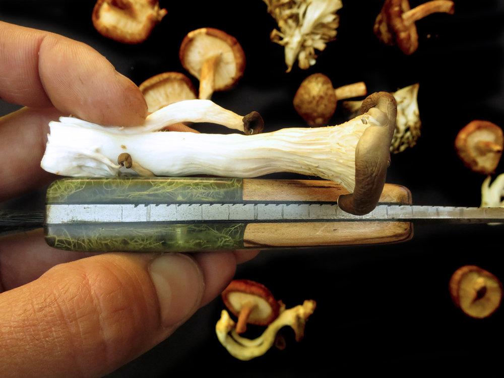 MushroomHunter_Measurements_1500px.JPG