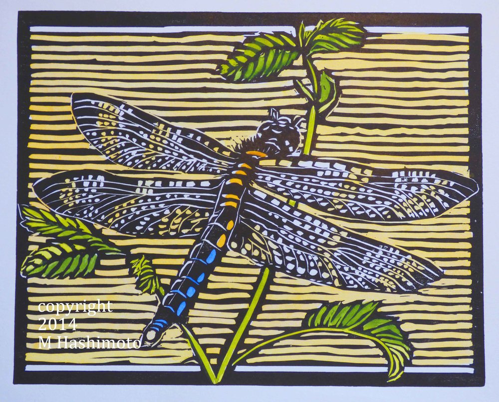 Dragonfly $115