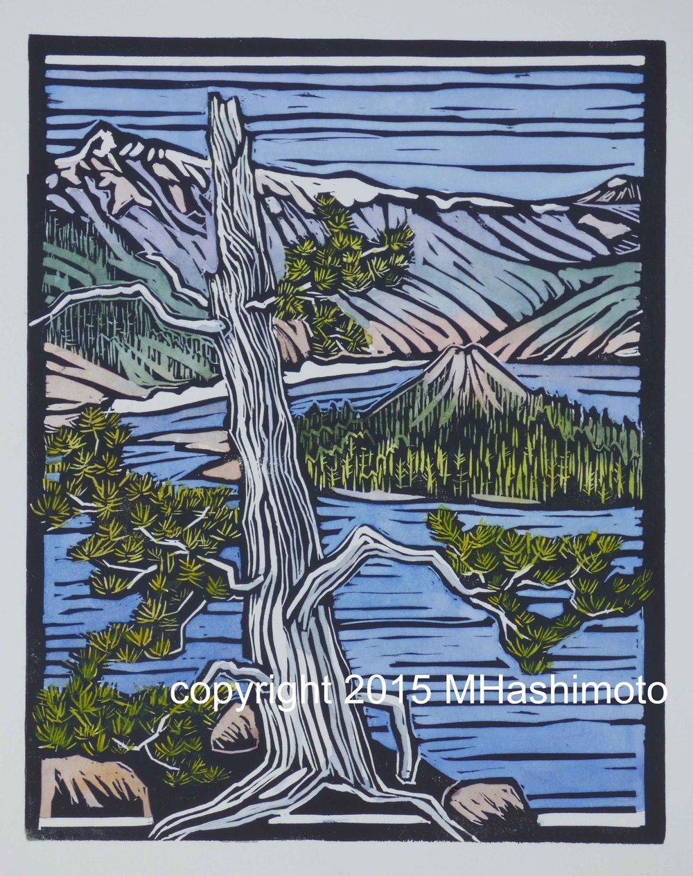 Whitebark Pine at Crater Lake - $115