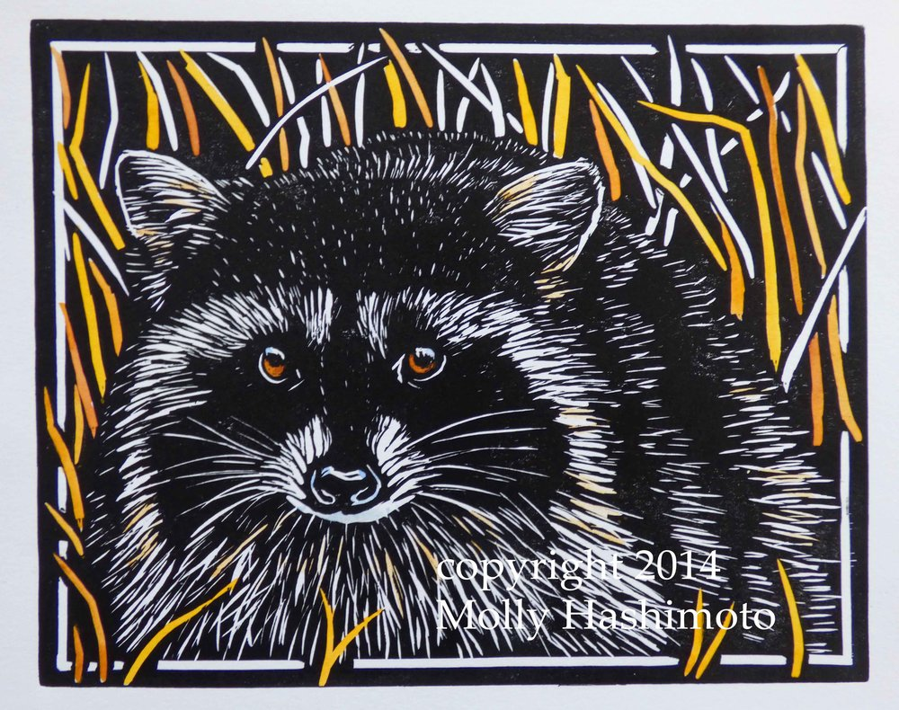 Raccoon $115