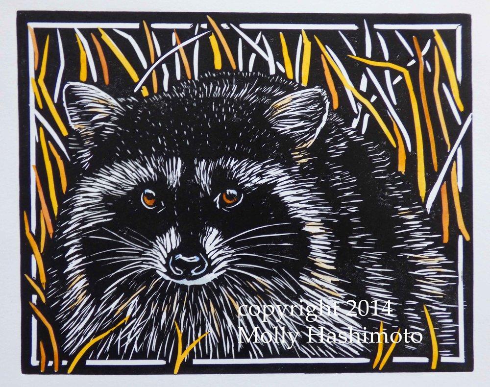 Raccoon $115