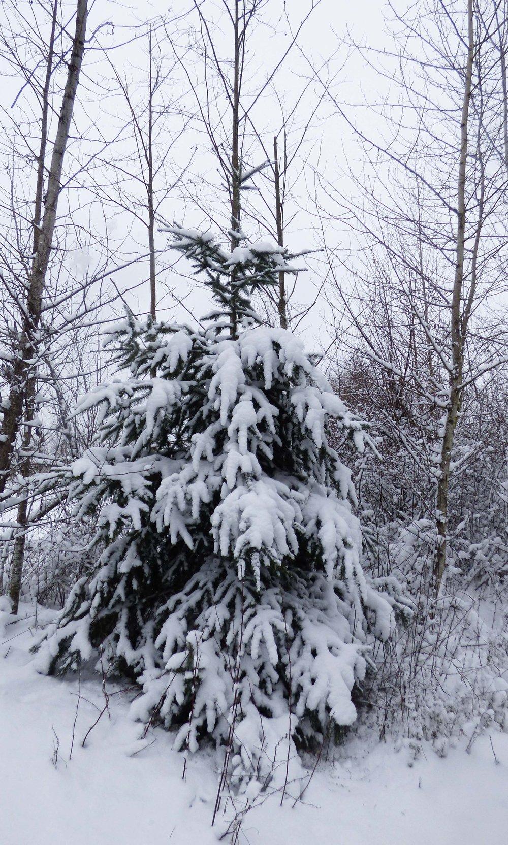 Snow texture 3.jpg