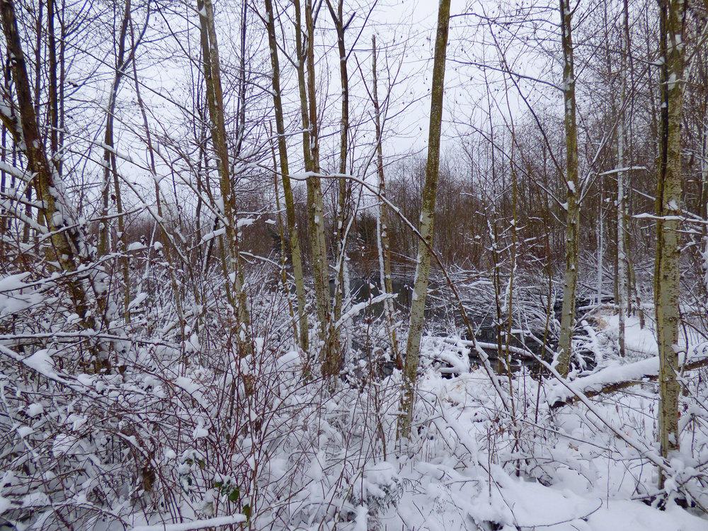 Wetland snow.jpg