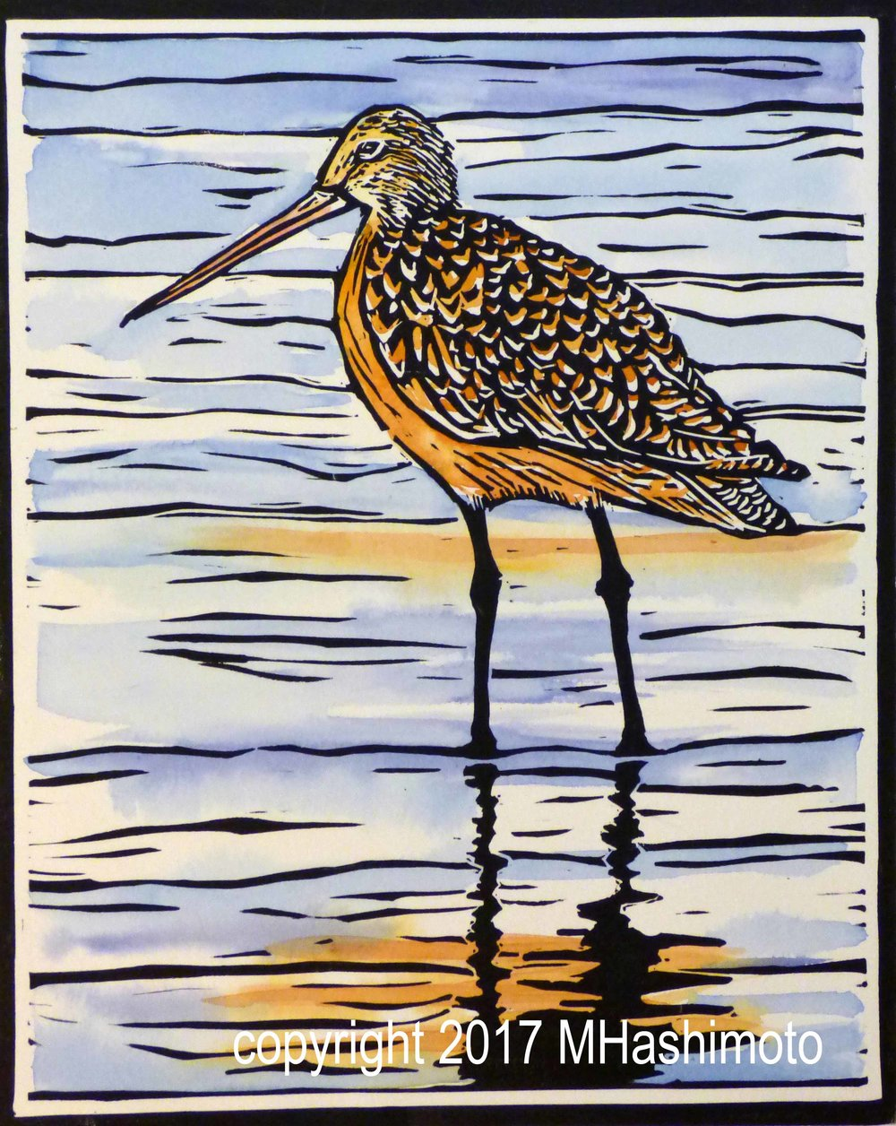 Long-billed Dowitcher $115