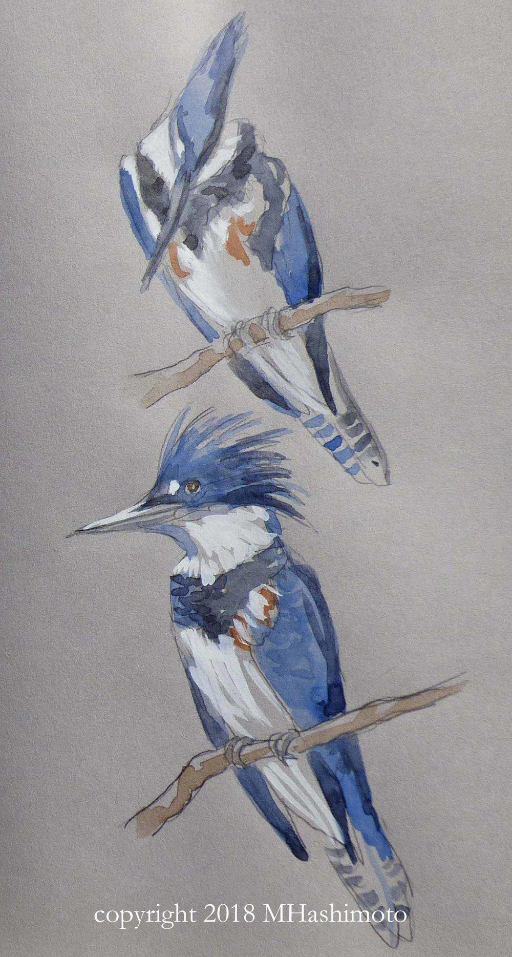 Kingfisher with copryight.jpg