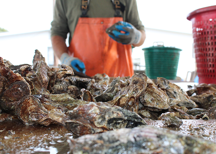 good-catch-oysters.png