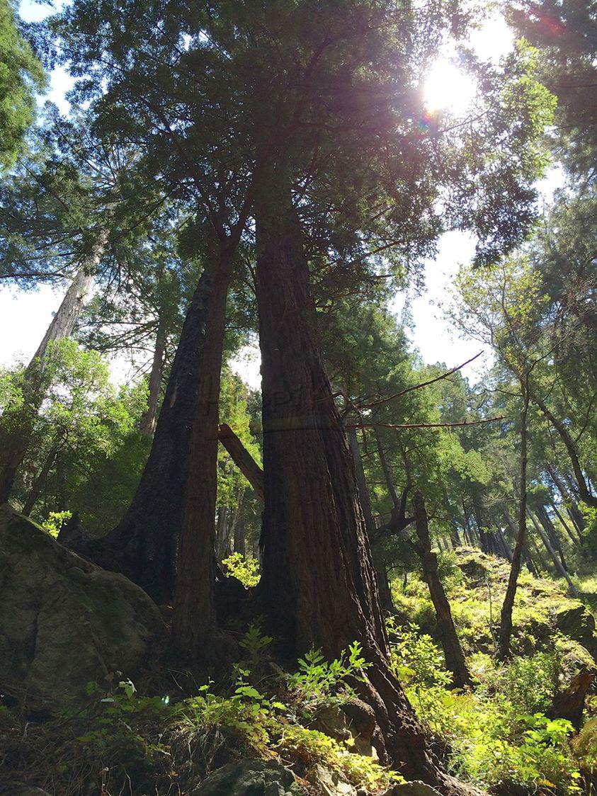 817373908394555_trees_wm.jpg