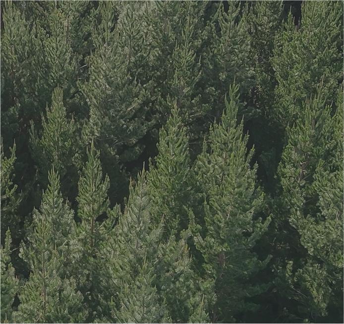 Forest Management -