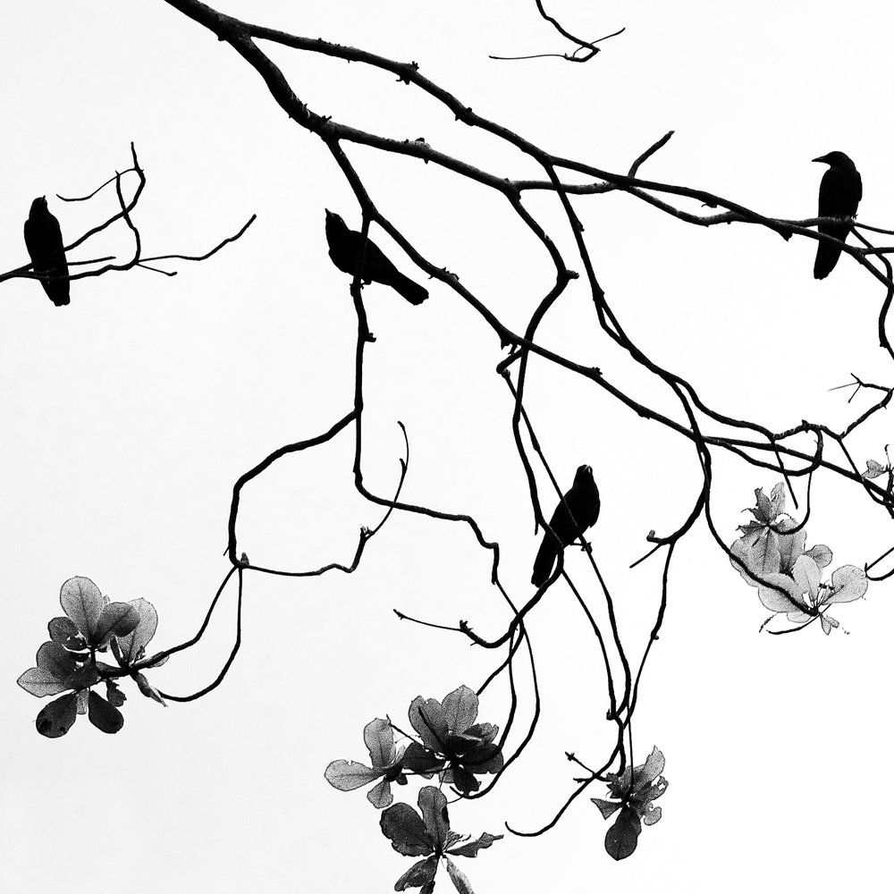 Birds and Blossoms_15x15_photo.jpg