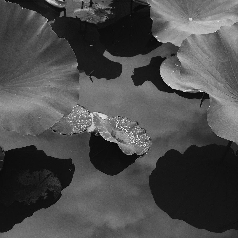 Lotus #6_12x12_highres.jpg
