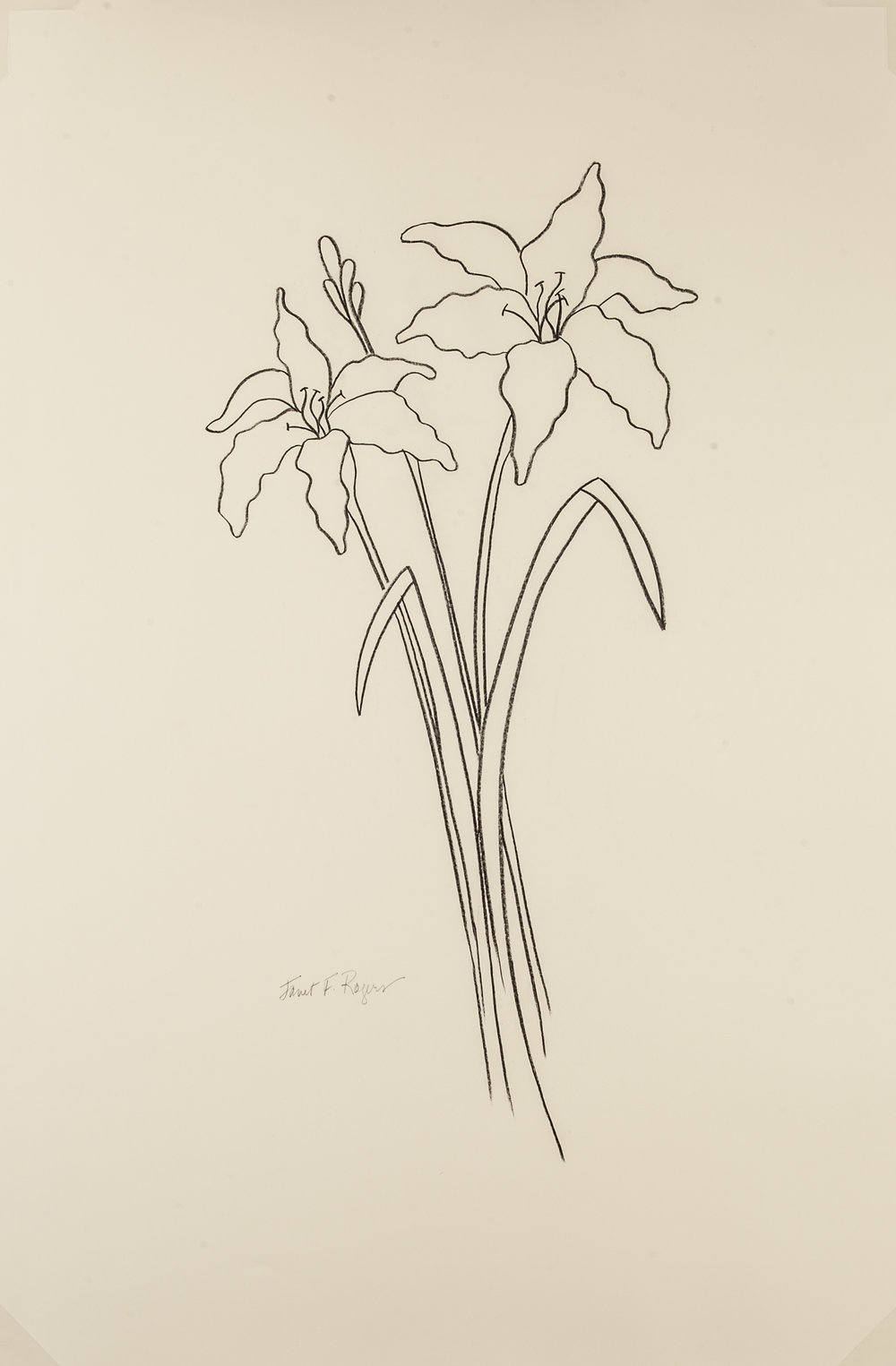 Day Lilies  , Janet Fry Rogers, China marker on paper  2016, Size: 26 x 40 (art), Price: $575 (C5883JR)
