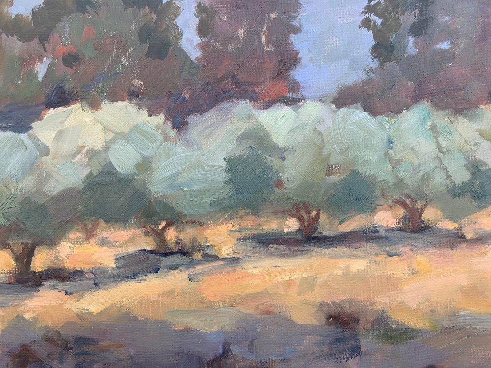 Upland Olive Grove