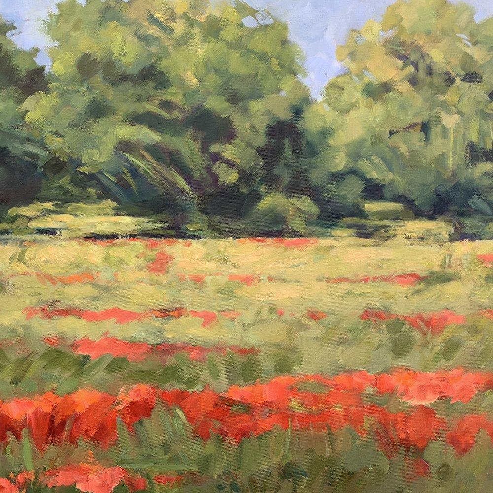 Provence Poppy Field
