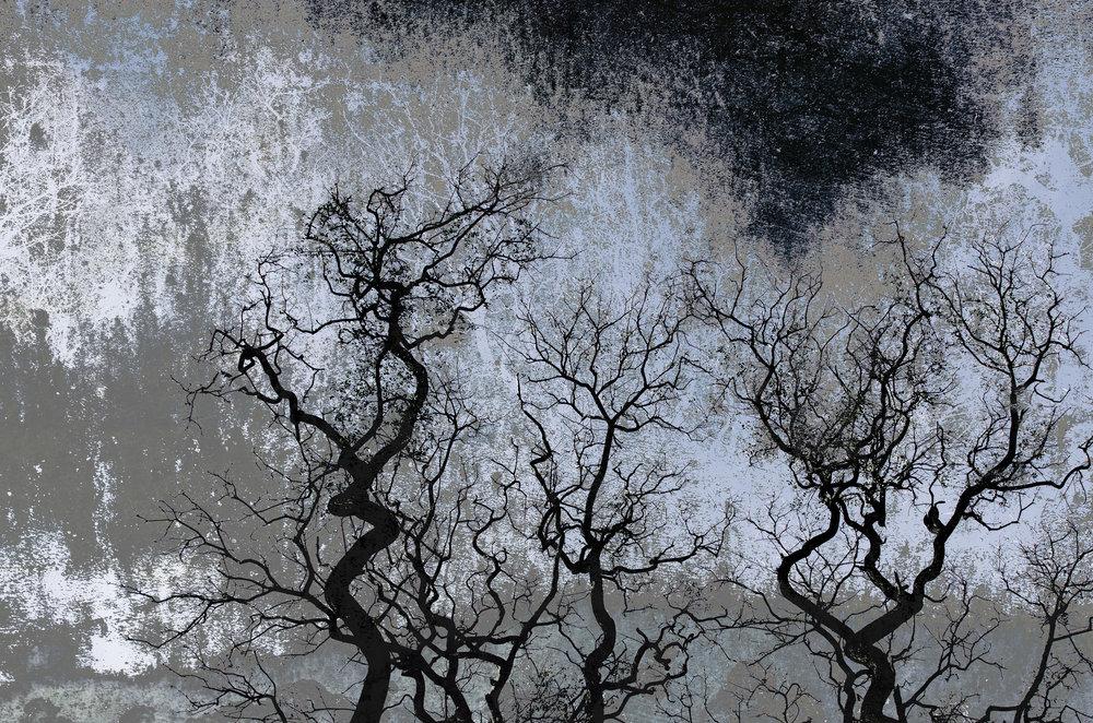 Arboles en Blanco y Negro / Trees in Black and White