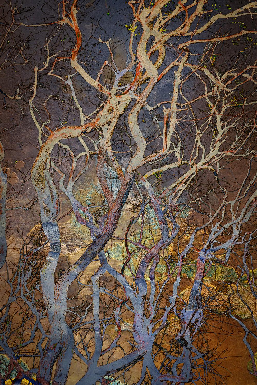 Ramas Torcidas I / Twisted Branches I