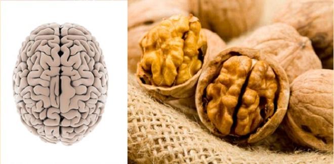 cerebro-nuez