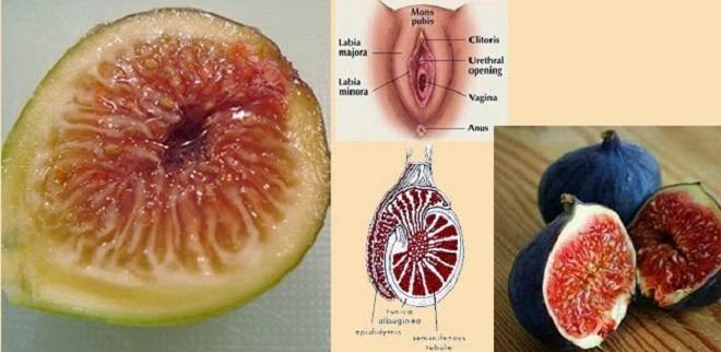 vagina_testiculos_brevas