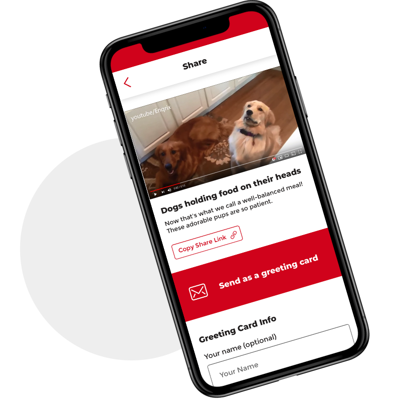 Happiness — Delivered - Using the AVGG app grants you mobile access to high-quality content guaranteed to create feel-good vibes.