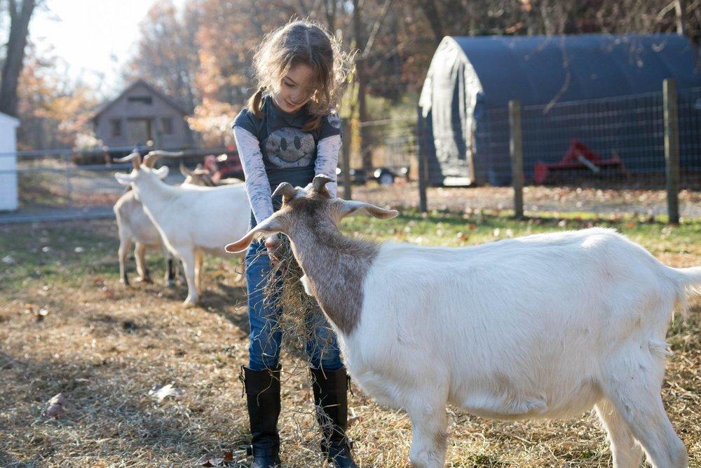 braids and goats 3.jpg