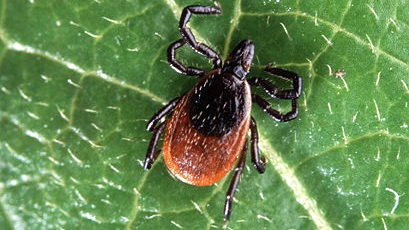 Pests and Diseases -