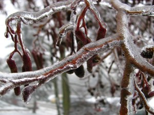 winter-216551_640.jpg