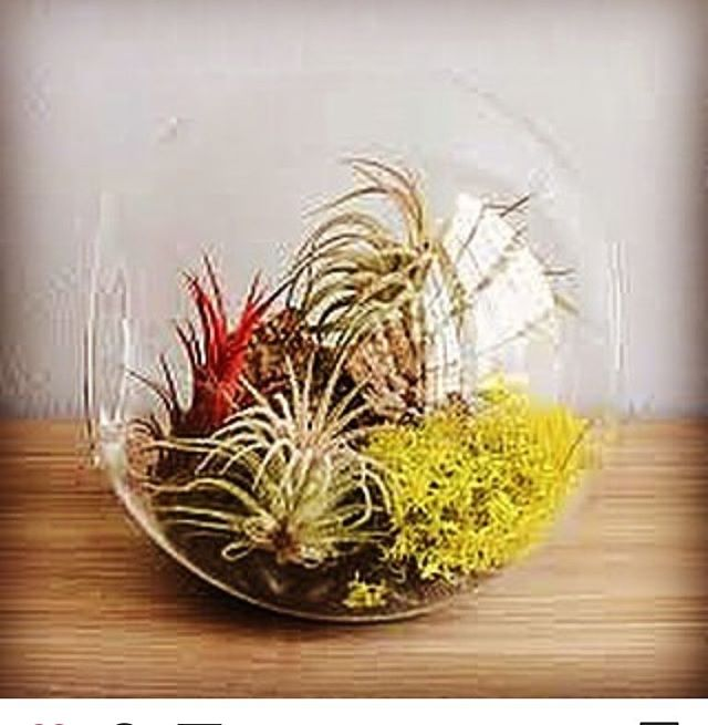 Winter got you feeling a little too white? Come create two mini eco system inside beautiful glass orbs. Friday 02/08 6 to 8 Sign up at SanfordLearns.org. . . . . #maine#mainelearns#classesinmaine#sanfordmaine#flowerinmaine#maineflorist