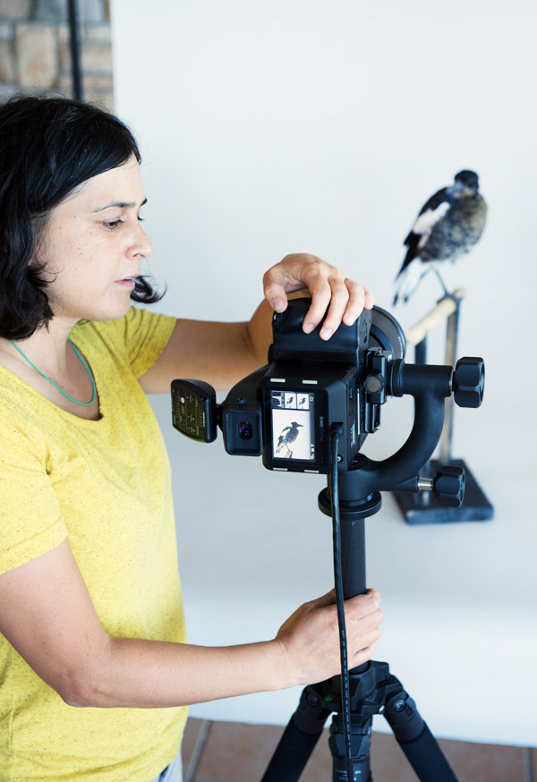 Leila in her studio with Penguin the Magpie .