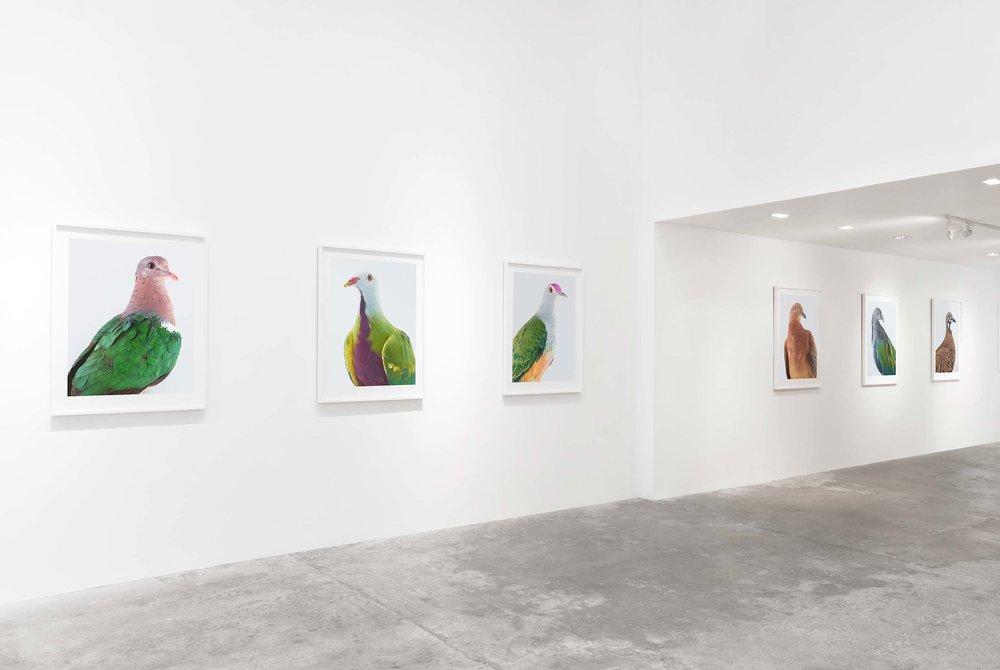 Exhibition  Ornithurae  (2017)