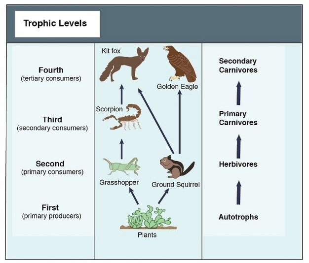 Figure 1. A simple food chain (Hui 2012).