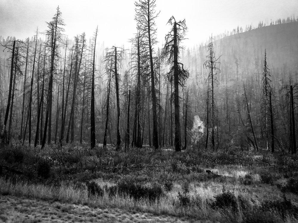 Burnt Trees Lolo