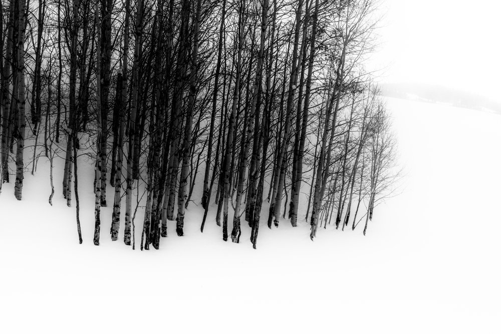 Steamboat Birches abstract.JPG