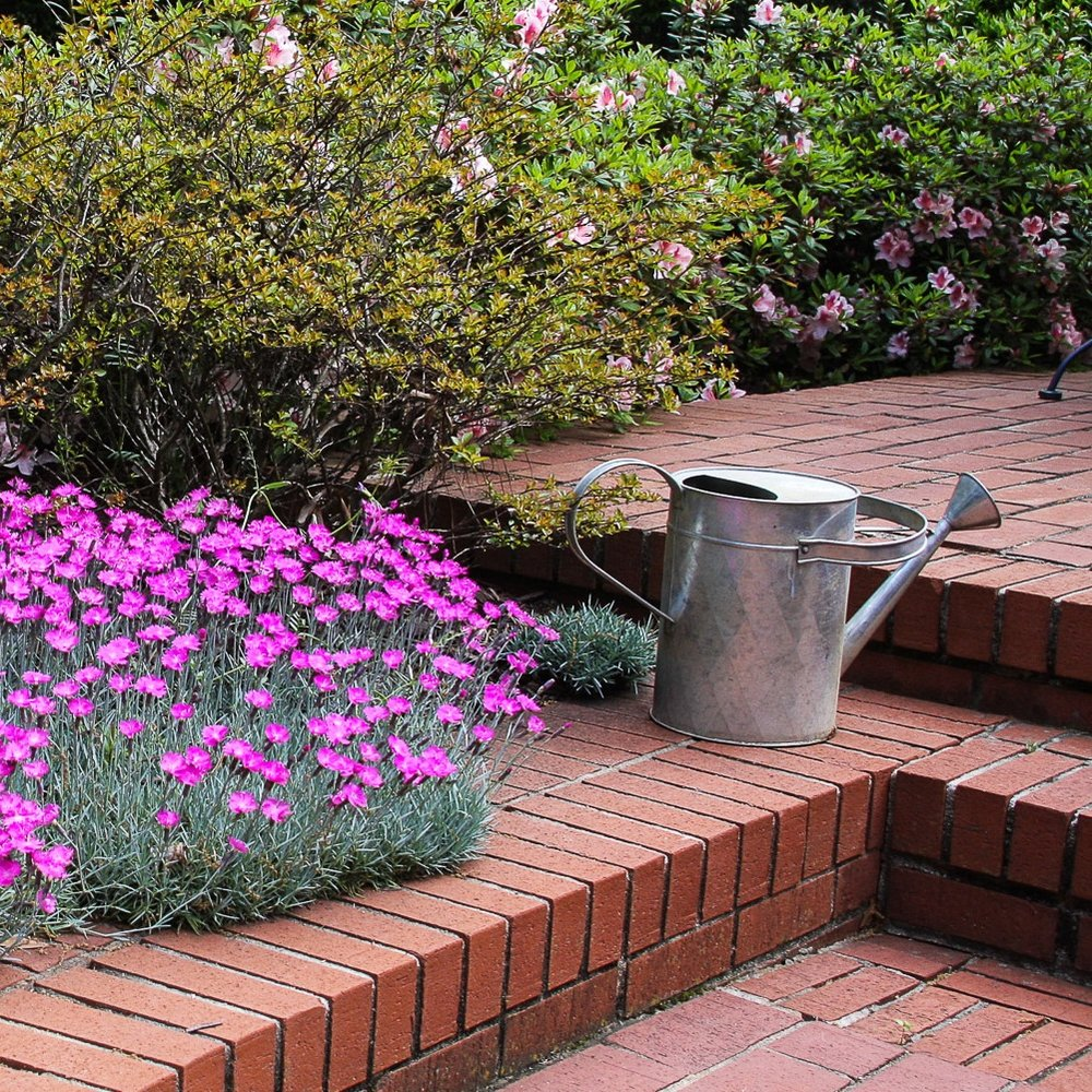 Metal watering can garden vignette