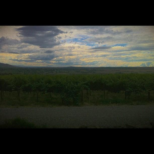 Hightower Winery #vscocam (Taken with  Instagram )