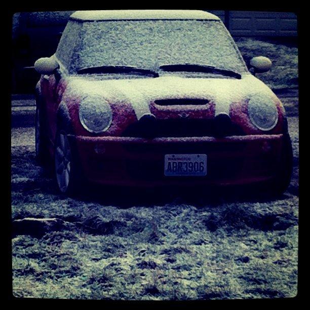 Mini Snow (Taken with  instagram )
