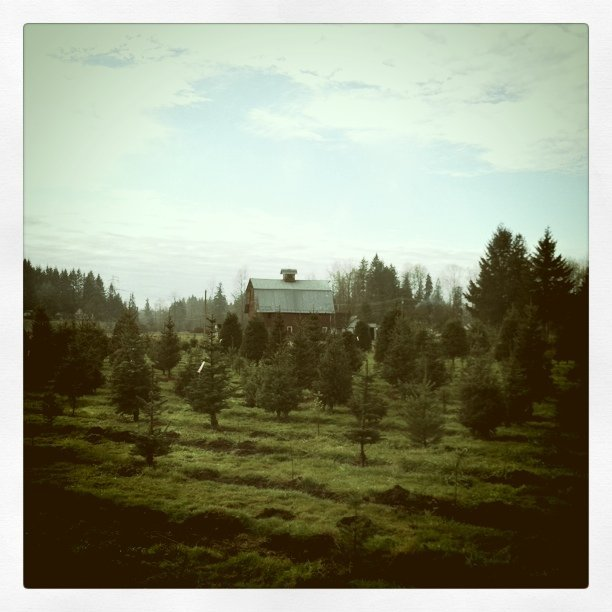 Hunting trees (Taken with  Instagram  at Lochsloy Tree Farm)