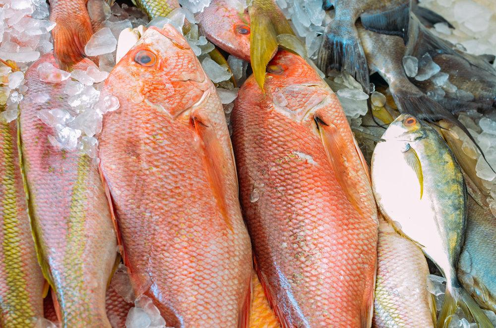 finfish.jpg