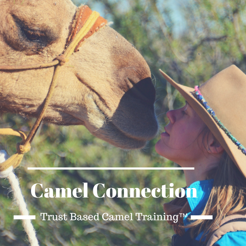 Camel Connection.png