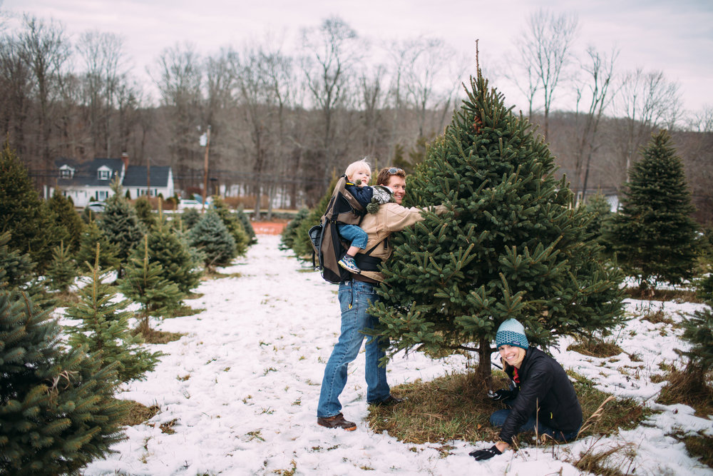 Christmas Tree farm photos, Connecticut Family photographer