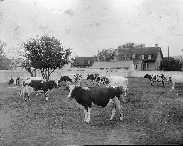 cattle1900_James-J.-Hill-549-.jpeg