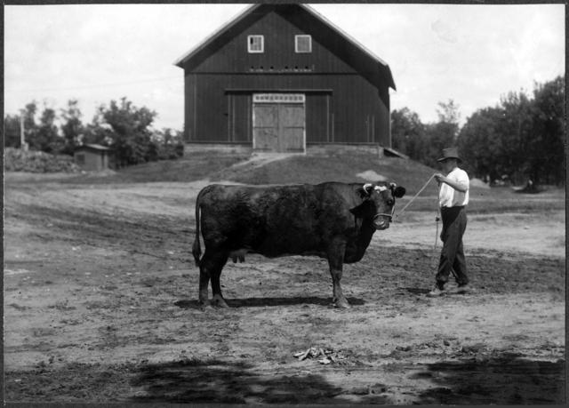 farmcattle1900_James-J.-Hill-569-.jpeg