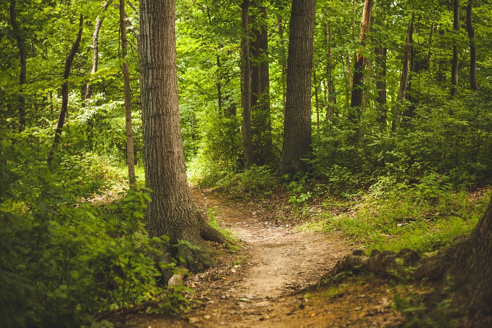 Take a Hike - Enjoy the 1.4 mile Mill View Trail. A scenic view from the bluff of the picturesque Dillard Mill is the reward for hiking this trail.