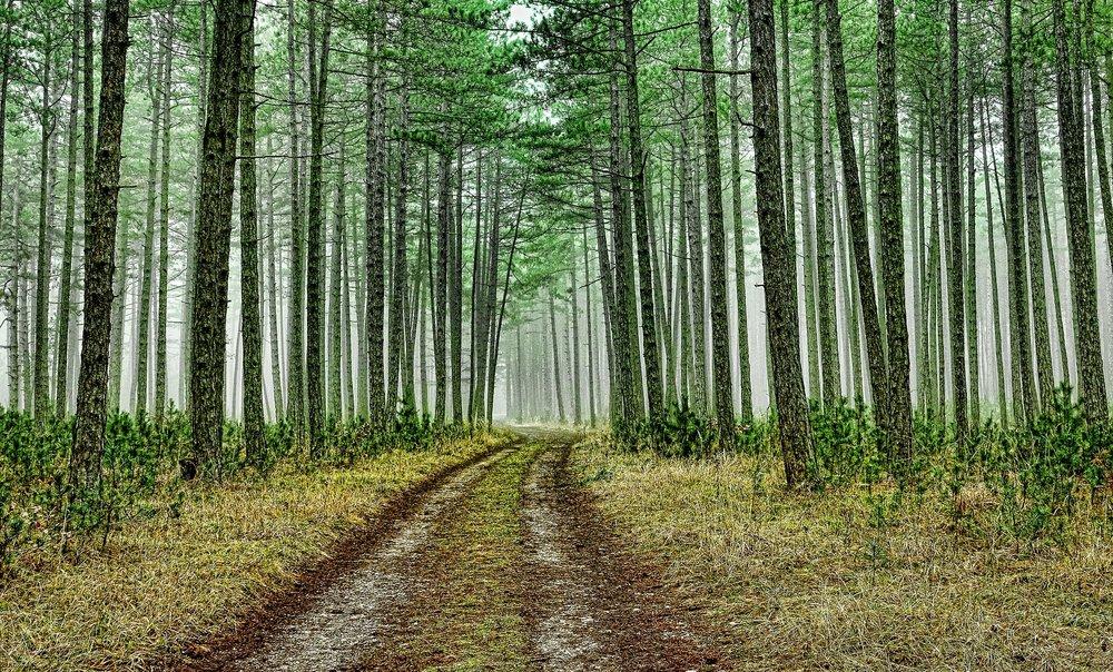wood-3180891_1920.jpg