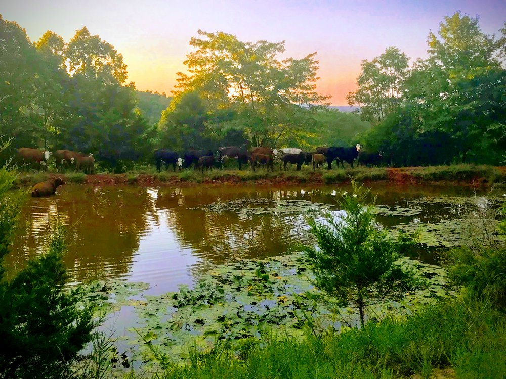 Pine Valley pond