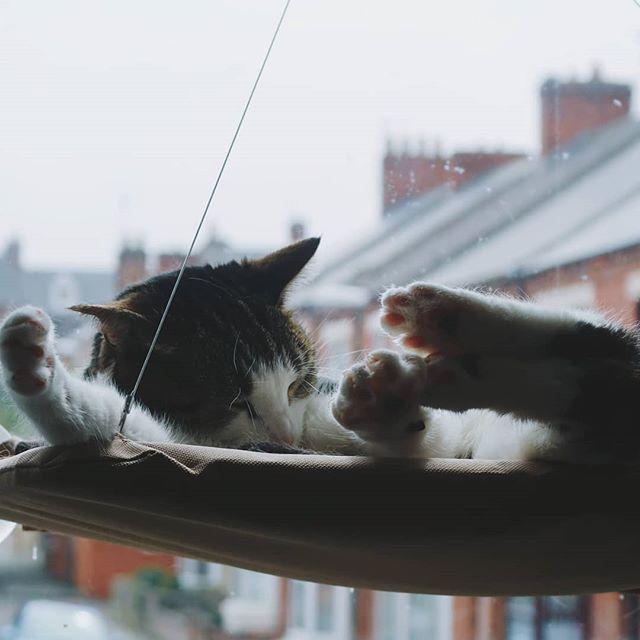 Toe beans aplenty. . . . . . #toebeans #cat #catgram #catsofinstagram