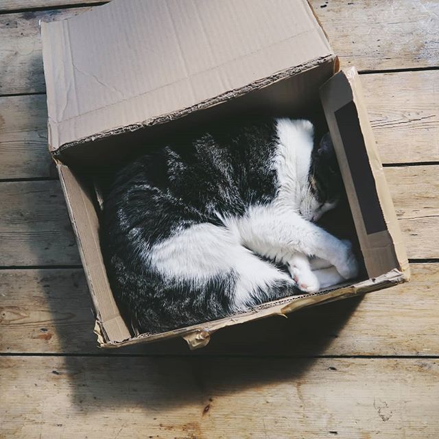 Special delivery! 📦📦 . . . #senditback #notwhatiordered #cat #catsofinstagram #catsandboxes #catinabox