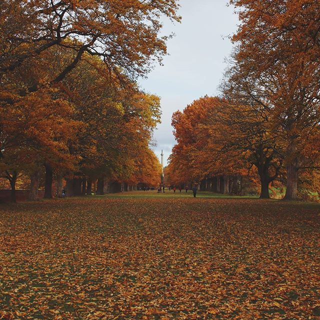 😍🍂 . . . . #autumn #autumntrees #fall #falltrees #gibside #nationaltrust